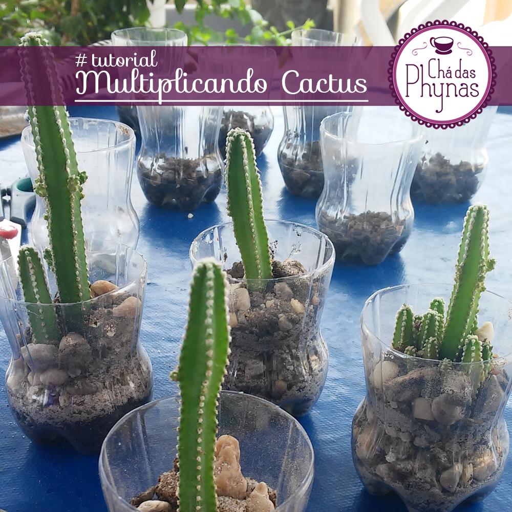 chamada cactus